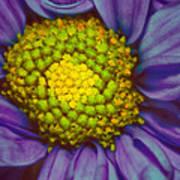 Extreme Flower Art Print