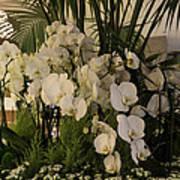 Exuberant Orchid Display Art Print