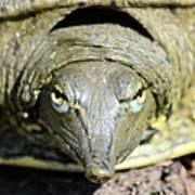 Eye Liner Turtle 8494 Art Print