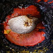 Eye Of Madrone Art Print