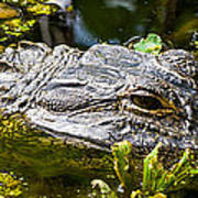 Eye Of The Alligator Art Print