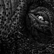Eye Of The Elephant Art Print