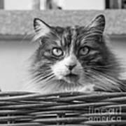 Eyecat Art Print