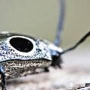 Eyed Click Beetle Art Print