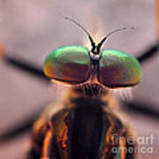 Eyes Of The Robber Fly Art Print