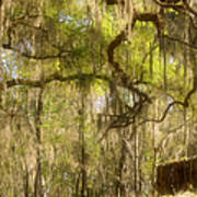 Fabulous Spanish Moss Art Print by Christine Till