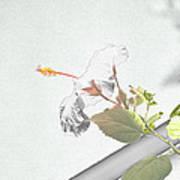 Fading Flower Art Print
