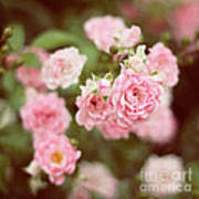 Fairy Roses Art Print