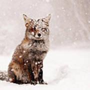 Fairytale Fox _ Red Fox in a Snow Storm Art Print