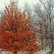 Fall And Winter 2 Art Print