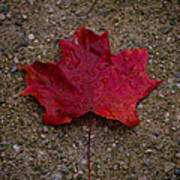 Fall Art Print by BandC  Photography
