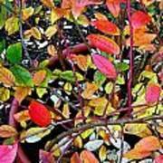 Fall Blueberry Bush Art Print