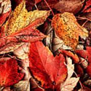 Fall Carpet Art Print