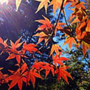 Fall Color 1 Art Print