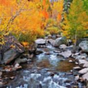 Fall Color Along Bishop Creek, Inyo Art Print