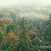 Fall Color And Fog Near Garberville California Art Print