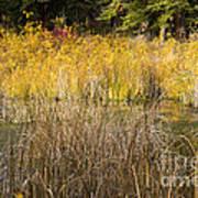 Fall Color At Banff Spring Basin Art Print