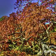 Fall Color At Biltmore Art Print