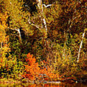 Fall Color Creekside Art Print