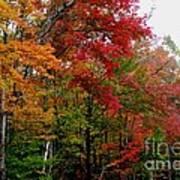 Fall Color Palette Art Print