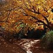 Fall Color Path Art Print