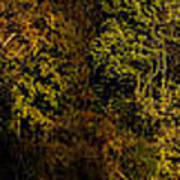 Fall Color Trees V7 Pano Art Print