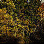 Fall Color Trees V8 Pano Art Print