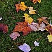 Fall Colored Leaves Art Print