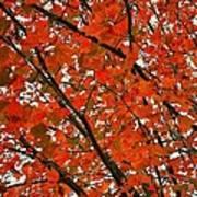 Fall Colors 2014-10 Art Print