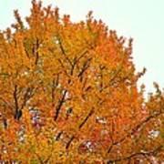 Fall Colors 2014-11 Art Print