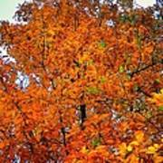Fall Colors 2014 - 14 Art Print