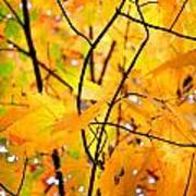 Fall Colors 2014-7 Art Print