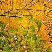 Fall Colors 2014-8 Art Print