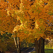 Fall Colors Art Print by Adam Romanowicz