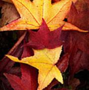 Fall Colors Art Print by Bobbi Feasel