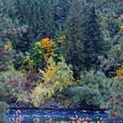 Fall Colors By The Spokane River Art Print