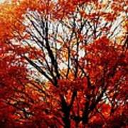 Fall Colors Cape May Nj Art Print