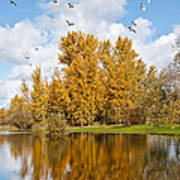 Fall Colors Clouds And Western Gulls Reflected In A Pond Art Print