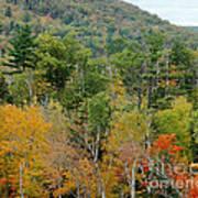 Fall Colors II Art Print