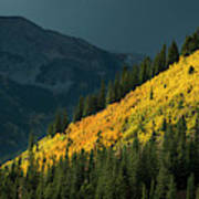 Fall Colors In Aspen Colorado Art Print