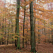 Fall Colors In Catoctin Mt. Park Art Print