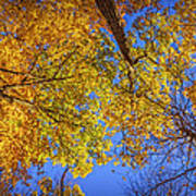 Fall Colors In The Sky  Art Print