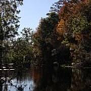 Fall Colors In The Swamp Art Print