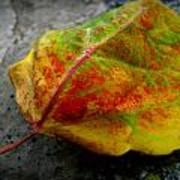 Fall Colors On A Downed Aspen Leaf Art Print