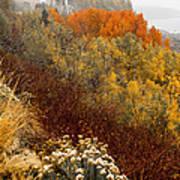 Fall Colors On June Lake Loop Art Print