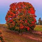 Fall Colors Over A Big Tree In Warmia In Poland During Twilight Hour Art Print