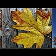 Fall Colors Triptych Art Print