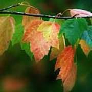 Fall Comes Art Print