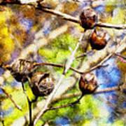 Fall Crepe Myrtle Art Print