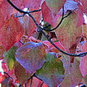 Fall Dogwood Leaf Colors 2 Art Print